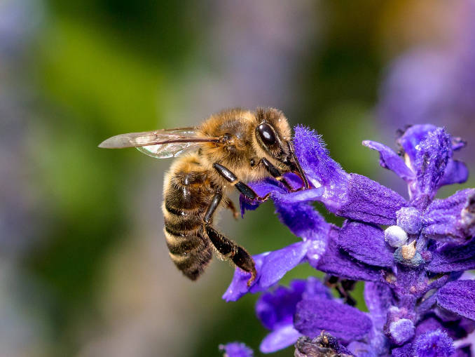 زنبور عسل و ذهن آرام